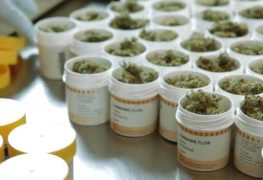Cannabis_OMK11-screenshot_lb