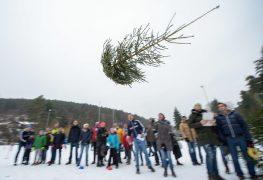 weihnachtsbaumwerfen