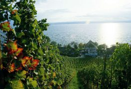 Vineyards Haltnau Meersburg